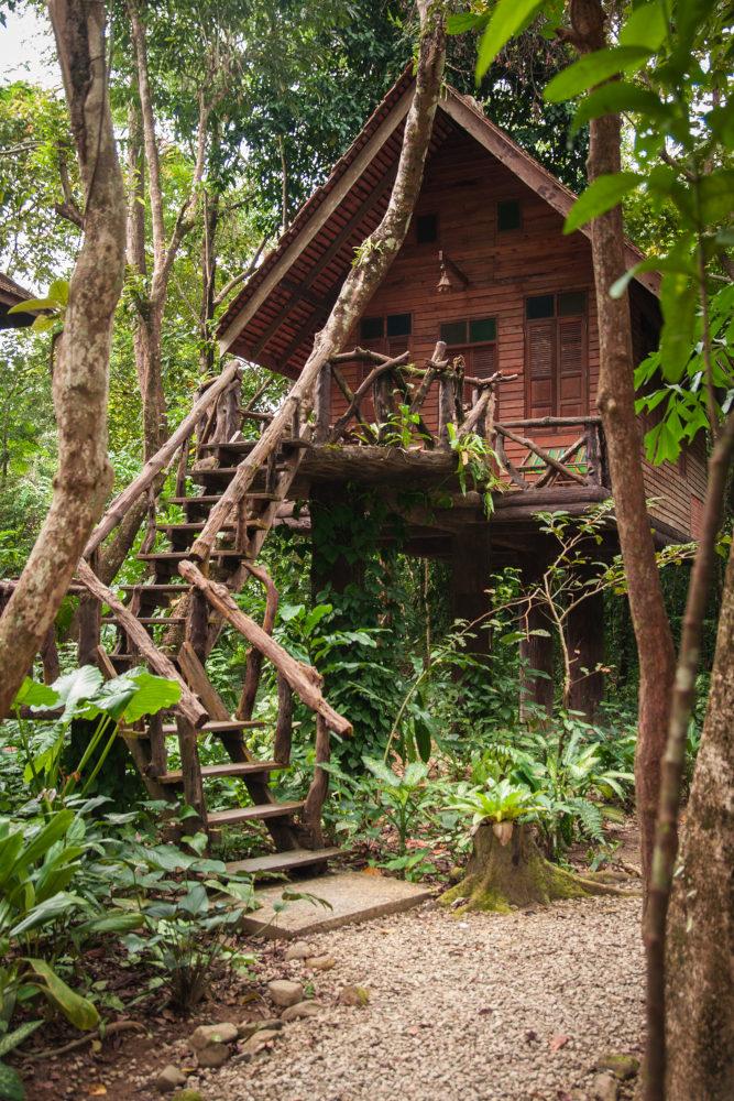 Khao Sok Safari Tour Treehouse